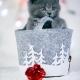 Sesja-Świąteczna-Hodowli21979