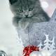 Sesja-Świąteczna-Hodowli21987