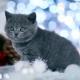 Sesja-Świąteczna-Hodowli22053