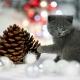 Sesja-Świąteczna-Hodowli22063