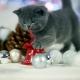 Sesja-Świąteczna-Hodowli22067
