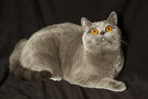 Chloe Cat's Avenue*PL